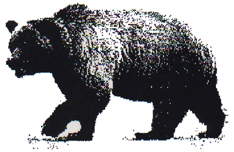 Hung married bear breeds asian cub